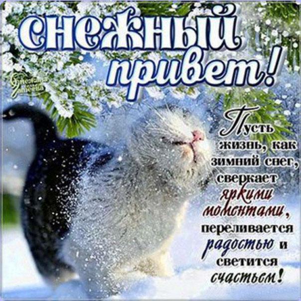 Снежный зимний привет картинка